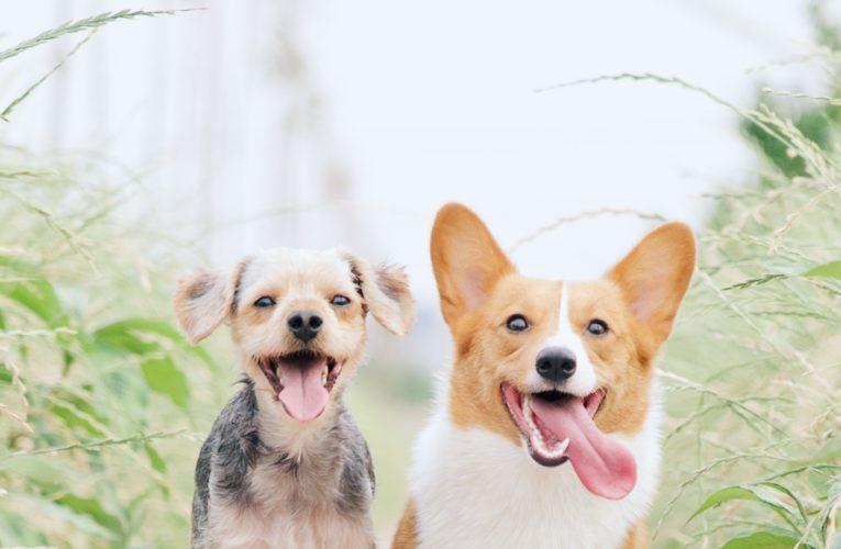 Preventing Home Dog Fights in Amarillo